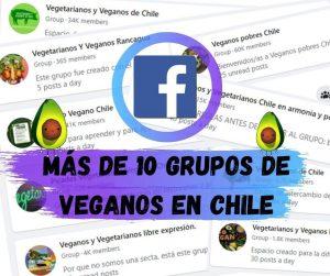 grupos de veganos y vegetarianos en Chile