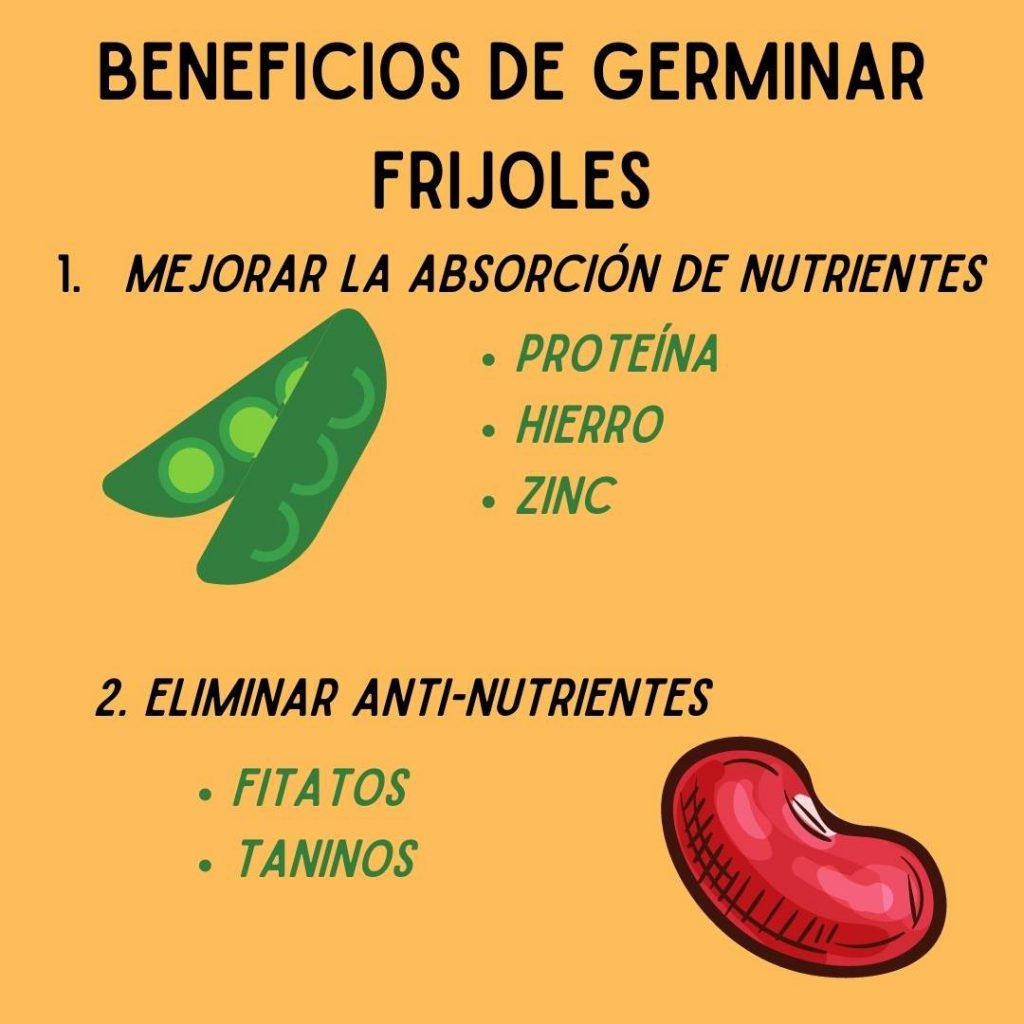 como germinar frijoles- beneficios