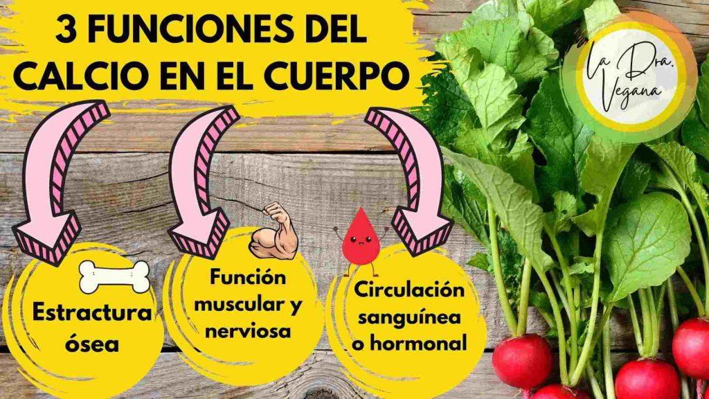 FUNCIONES DEL CALCIO EN EL CUERPO VEGANO